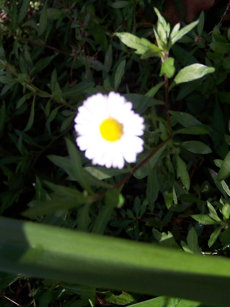 Daisy by Princessbren2006