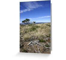 Bleached by time Greeting Card
