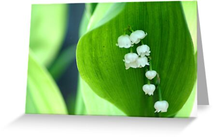 Lilly of the Valley by Nate Welk