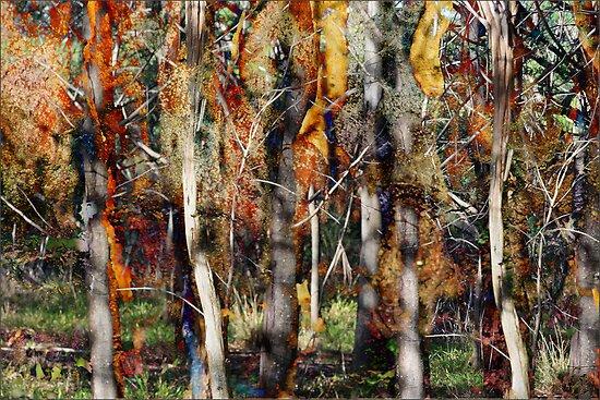 Dry Gum Forest by Sabine Spiesser