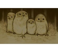 Owlets Photographic Print