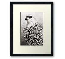 The Gyrfalcon Framed Print