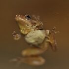 One Eyed Lil Frog  by Wviolet28