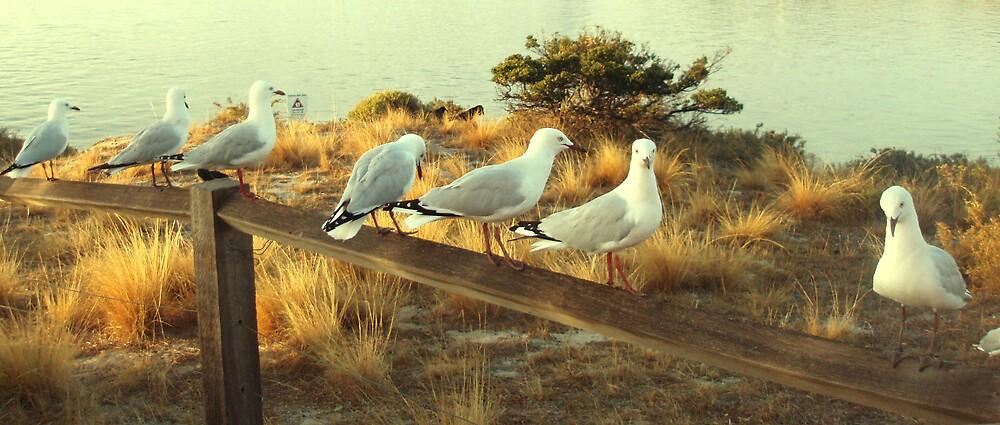 Seagulls by Carolyn