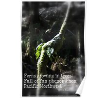 snowy Oregon ferns in trees 2 with haiku Poster