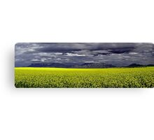 Storm Over The Canola Field  Canvas Print