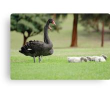 Black Swan Family  Canvas Print