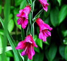Flower by breshneaf