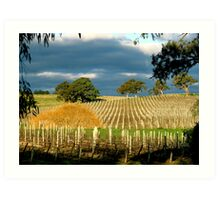 Howard Vineyard - Adelaide Hills Art Print