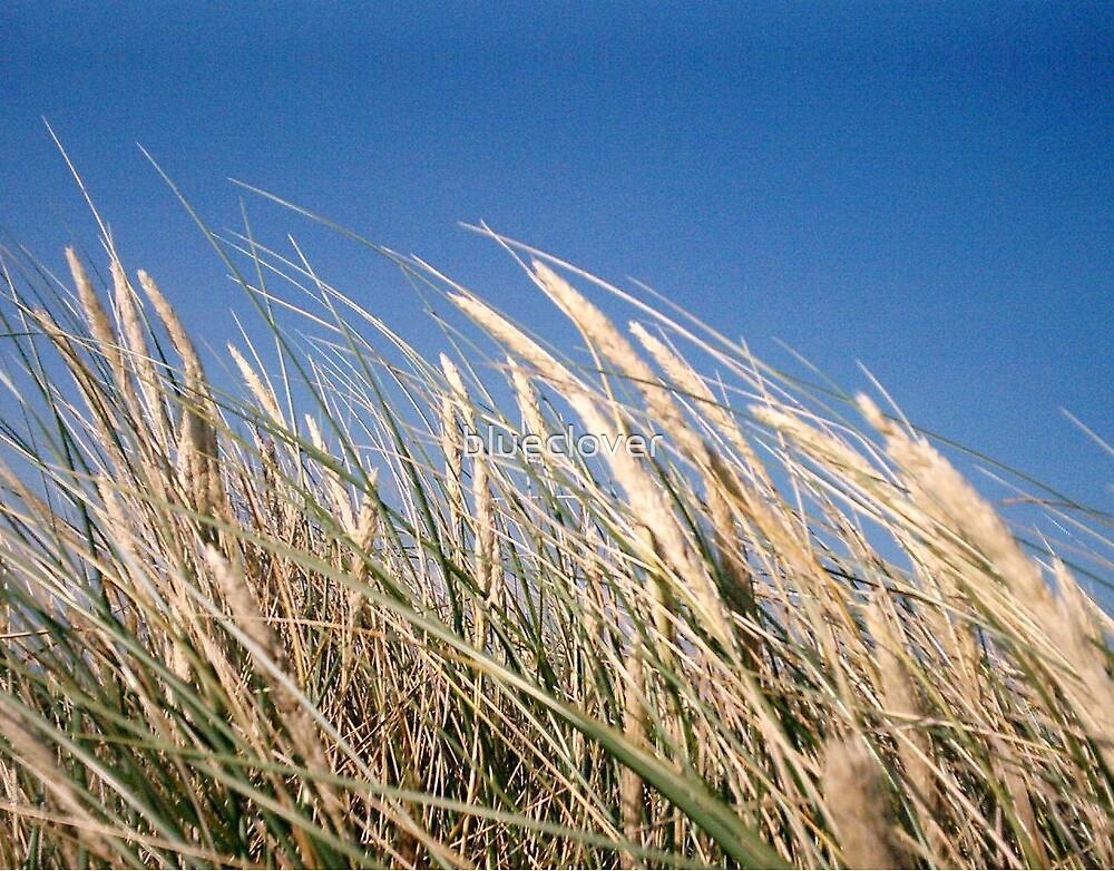 Sea grass by blueclover