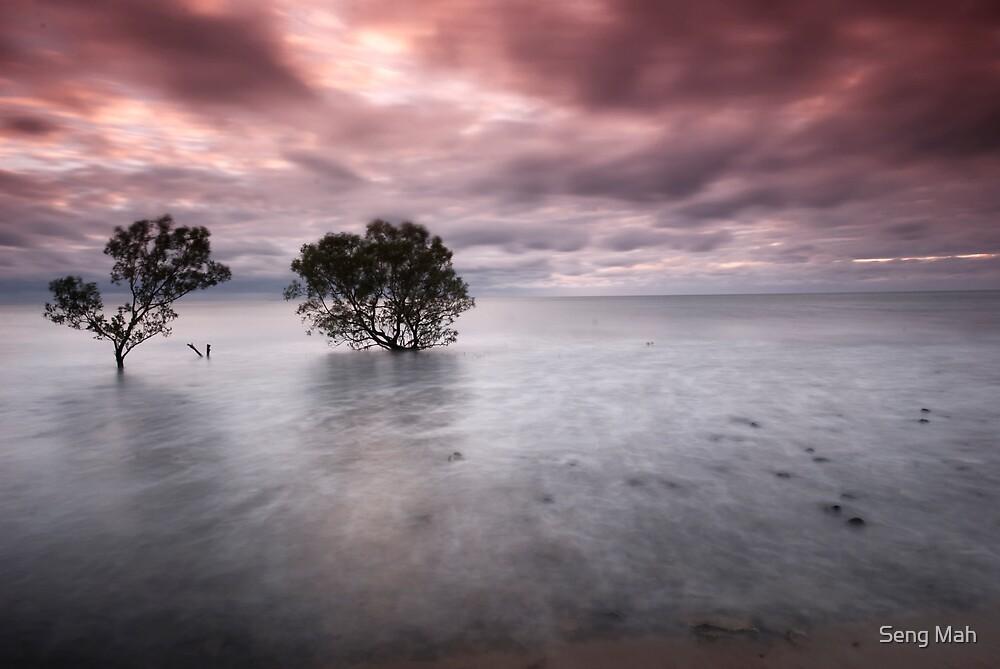 Mangrove dawn by Seng Mah