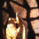Leaf points through light grate by Nadia Korths