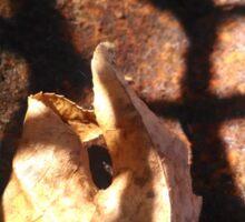 Leaf points through light grate Sticker