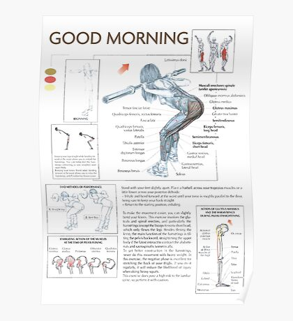 Barbell Good Morning - Muscle Diagram Poster