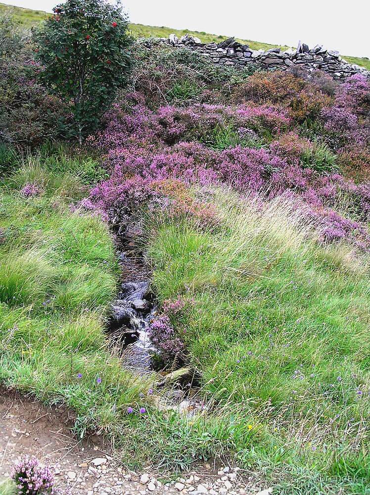 The heather from Ireland by brendak