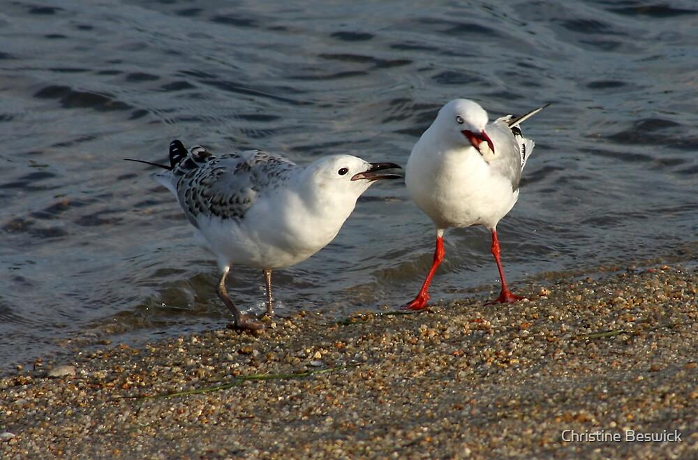 Silver gulls by Christine Beswick