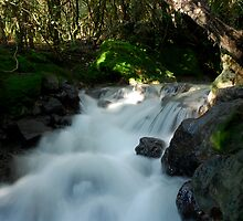 Tongariro Forest Falls by Rupert