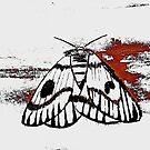 moth by samos