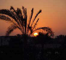 sunset by wella