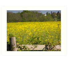 Yellow field Art Print