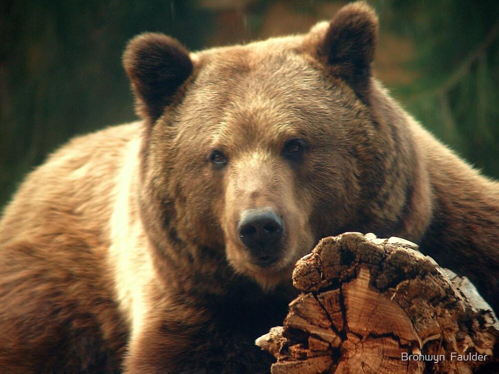 Brown Bear by Bronwyn  Faulder