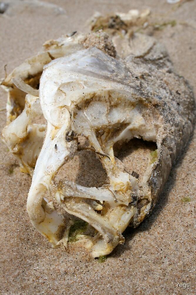 dead fish by regs
