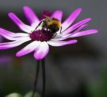 Buzz by GingerLotus