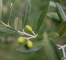 Olives by Anon