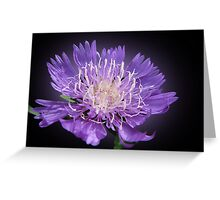The violet inspiration Greeting Card