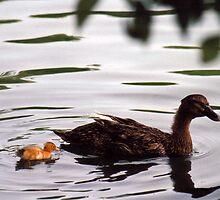 mama and baby by David Stembaugh