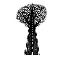 Road and tree Photographic Print