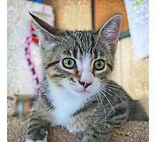 Green Eye Cute Tabby Kitten Photographic Print