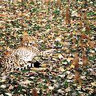 Spot Me?? by TJ Alexander