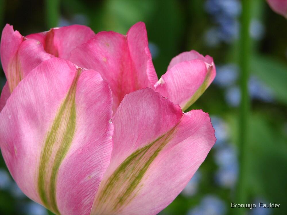 Tulip by Bronwyn  Faulder