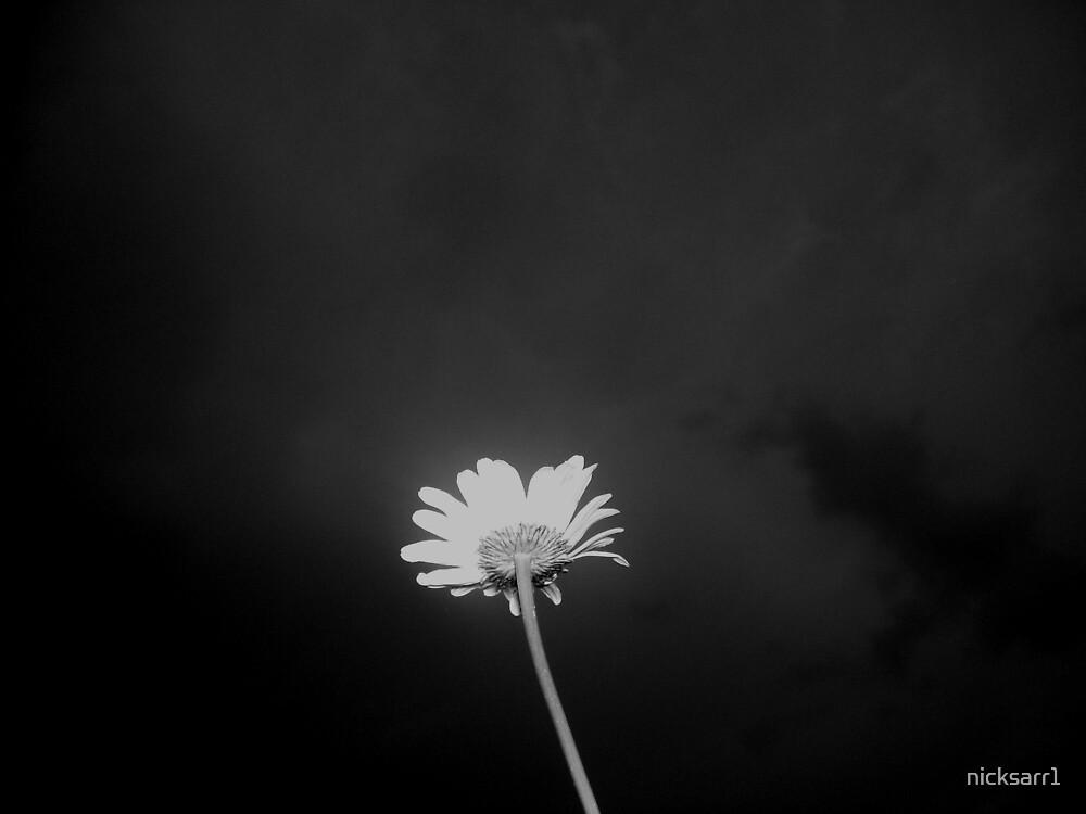 flower by nicksarr1