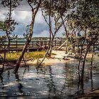 Bribie Island Boardwalk by Sandra Anderson