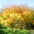 orange, brightness, cheerfull by oilersfan11