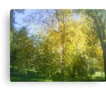 coloured trees of fall Canvas Print