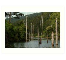 Lake Elizabeth Otway's Art Print