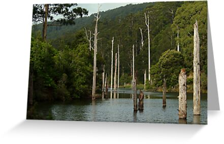 Lake Elizabeth Otway's by Joe Mortelliti