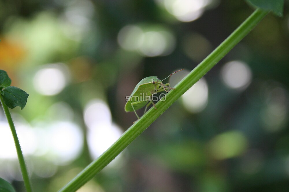 green bug on tree limb by Rachel Lewter