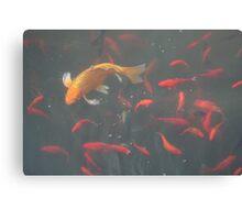 orange goldfish in the water Canvas Print