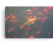 orange goldfish in the water 2007 Canvas Print