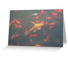 orange goldfish in the water 2007 Greeting Card