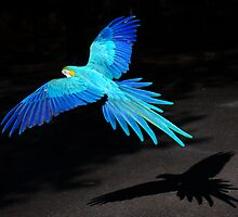 blue flight by Matt Mawson