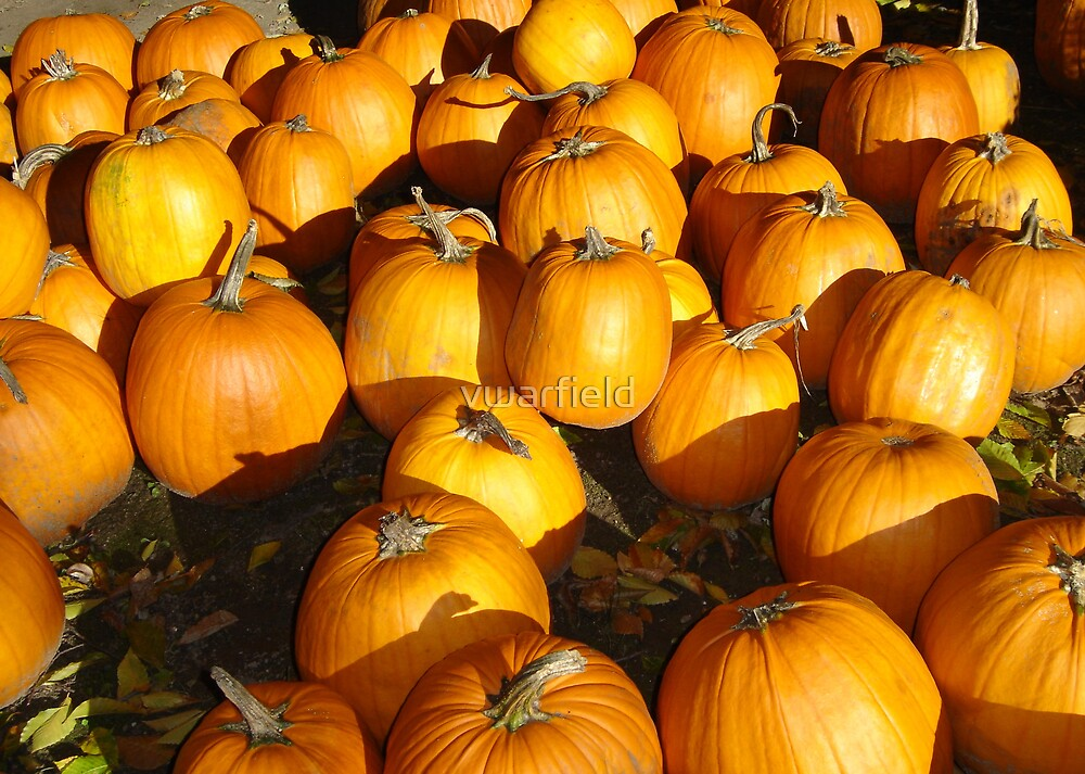 pumpkins by vwarfield