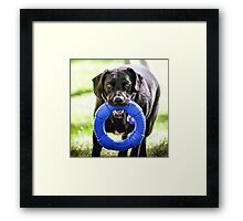 "Black Lab Mix"" Cooper"" Formerly Dodger Framed Print"