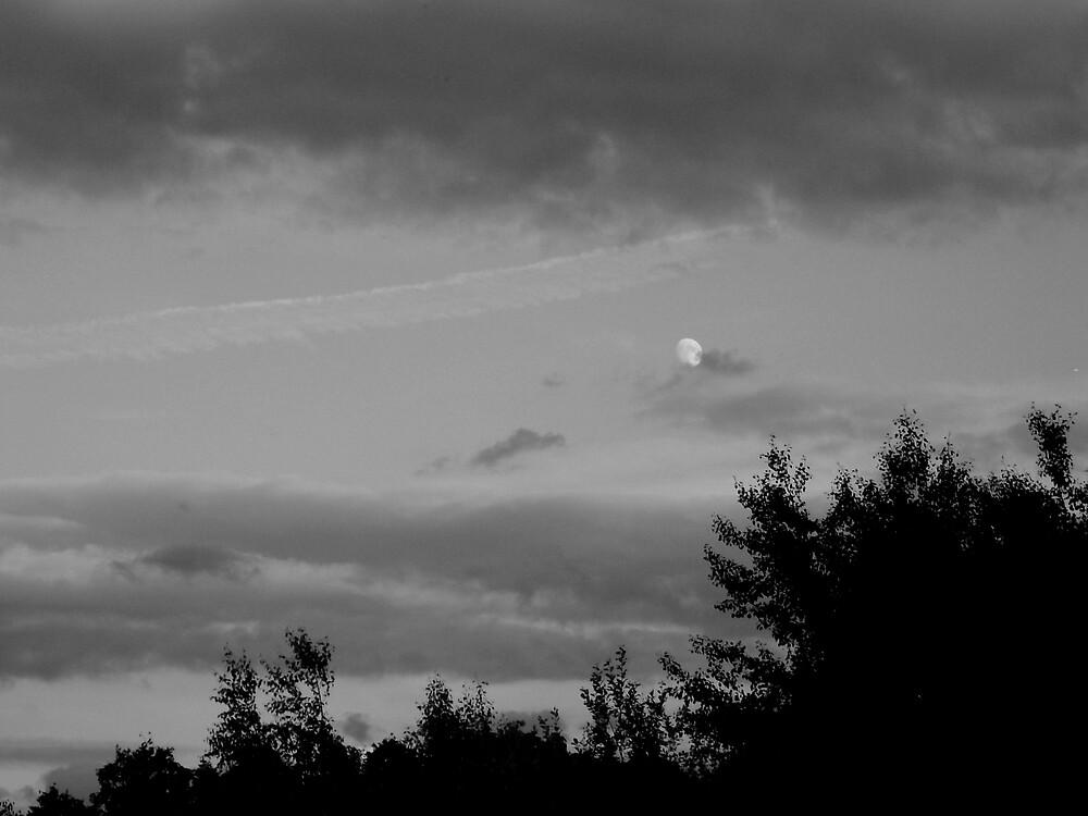 Moon by Sam Everitt