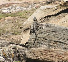 Rock Lizzard by Timmy