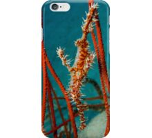 Harlequin Ghost Pipefish, Kimbe Bay, Papua New Guinea iPhone Case/Skin